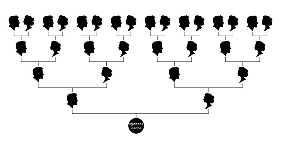 Rodokmenový graf - vývod z předků